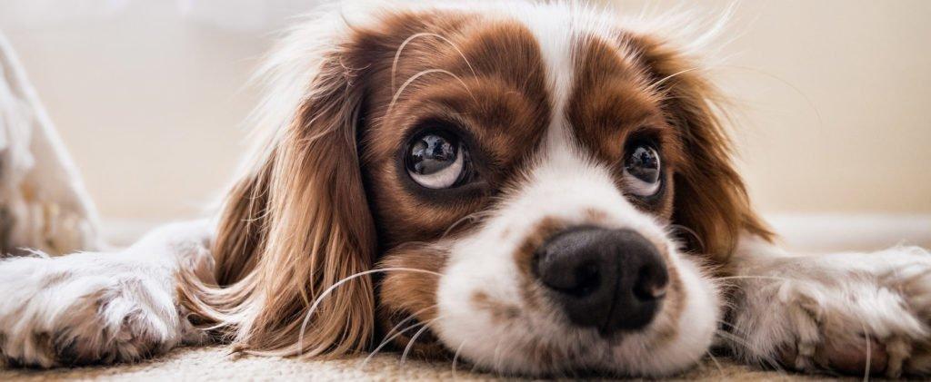 Hundeschule Hunde Verhaltensberatung