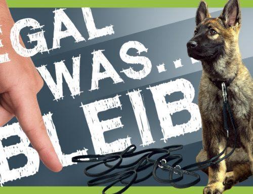 Wie Du deinem Hund BLEIB beibringst